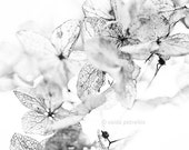 """From the """"Nature Graphics"""" Series - Original Signed Fine Art Photography Print 6x6 inches (15x15 cm) - VaidaPhoto"""