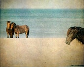 Horse Photograph - wild horses on beach, ocean sand summer nature animal, 12x12 - Wild Ones - SherriConley