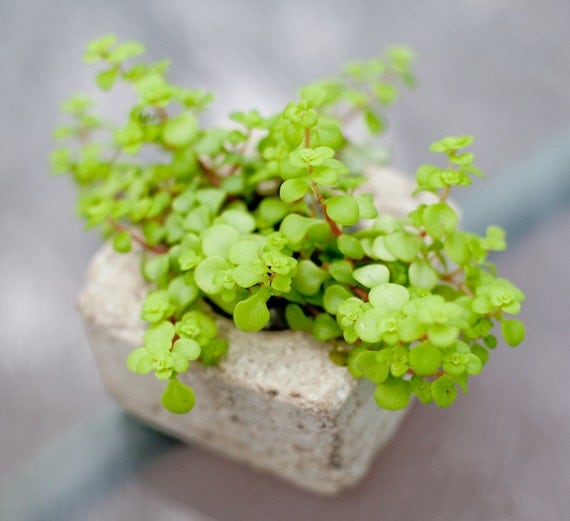 Bettina: Small Hypertufa pot, Concrete Pot, without plant