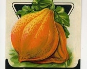 Vintage Seed Packet Boston Marrow Squash - Great Graphics - VintageVendor