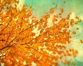 Autumn photography fall leaves woodland photograph orange tree persimmon orange leaves mint sky naturalist photo tango tangerine - CarlChristensen