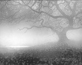 art tree landscape FOG OAK print signed 8x10 - lewfoster