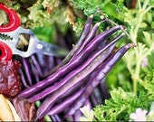Organic Louisiana Purple Pod Pole Bean Heirloom Vegetable Seeds - nimblenitecap