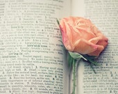 book love rose photograph / flower, text, print, love, rose, pink, peach, apricot, valentine / lovesickness / 8x10 fine art photo - shannonpix