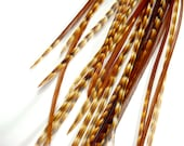 """10 Ginger Grizzly Variant Feather Extensions, 6-7"""" Tiger Stripes - intrinsicimagination"""
