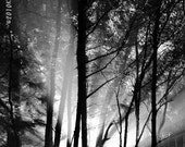 Photography Black and White Landscape Alien abduction scary woods dramatic theatrical decor sci fi spooky monster Home Decor - KClarkPhotography