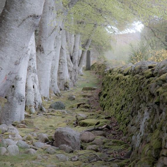 photo of Scottish woodland
