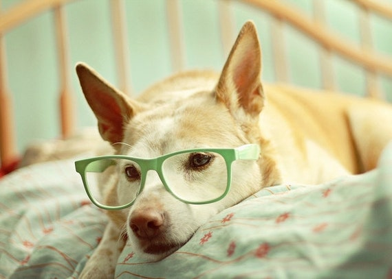 In Deep Thought - 5x7 Fine Art Photography Print - dog puppy pet portrait glasses mint green pastel cute home decor photograph