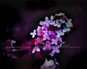 A Dark Flower - 4X6 Fine Art Photograph - margaretlillian