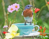 Billy Bluebird Tea Time - EyesOfLuana