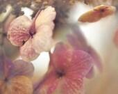 Easter, Flower photography, pastel wall decor, hydrangea, beige, pink, garden, botanic floral, feminine - Raceytay