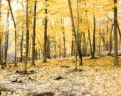Yellow Forest Photography - the woods in Autumn - 5x7 Nature print - sunny gold decor warm brown - Moonrise Kingdom - Raceytay