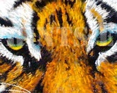 The eyes of The Tiger Approx. size 11.5 x 3 (LIMITED EDITION PRINT) - newartprints