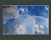 Blue Jellyfish - RoArt