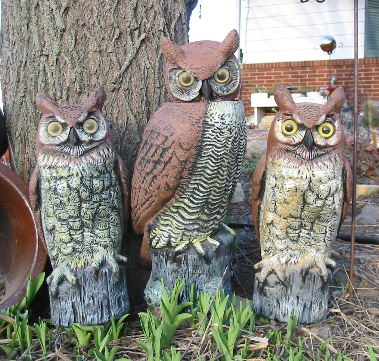 Outdoor garden decor statues photograph owls what a h - Garden decor accessories ...