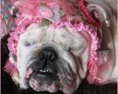 English Bulldog Hat-- Custom Pattern- Funny Dog Hat - MeatyWildman