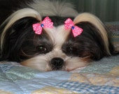 20 Puppy Dog Bows Extra Small to Small Yorky Maltese Grooming Bows
