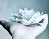 Offering- 5x7 Original Fine Art Photograph - Dreamy - Hand - Flower- White - Pastel - Soft - Dream - urbanantique