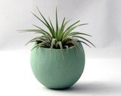 Single Air Plant Pod - Sage - seaandasters