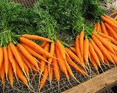 Organic Heirloom Nantes Coreless Carrot Seeds - kenyonorganics