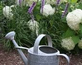 "Watering can garden scene with flowers -  5 x 7"" color print - CelesteCotaPhoto"