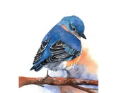 Bluebird Painting -B029-  Archival Print of bird watercolor painting 5 by 7 print - Splodgepodge