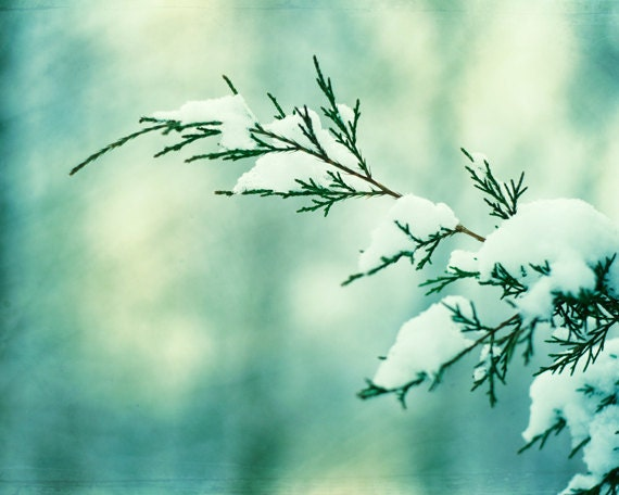 Winter photography - holiday decor nature photography snow branch - mint green white christmas teal wall art pine branches - 8x10 Photograph