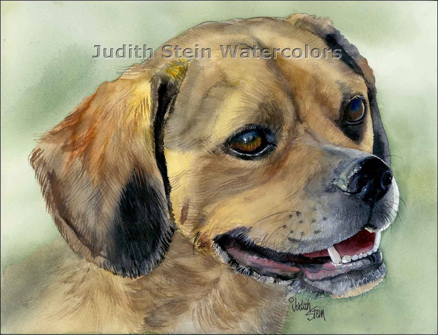 Puggle Pug Beagle Mix Wallpapers Pictures Breed Information | Dog ...