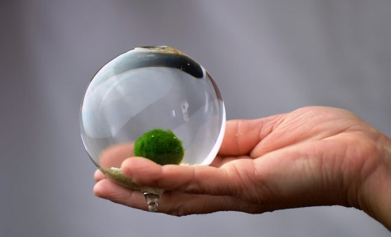 Marimo // Japanese Moss Ball Terrarium // Home and Garden // Miniature Footed Bud Vase Container