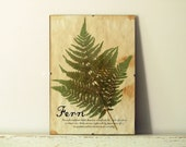 Pressed Herbs- Fern in Frame (6) - regularhome
