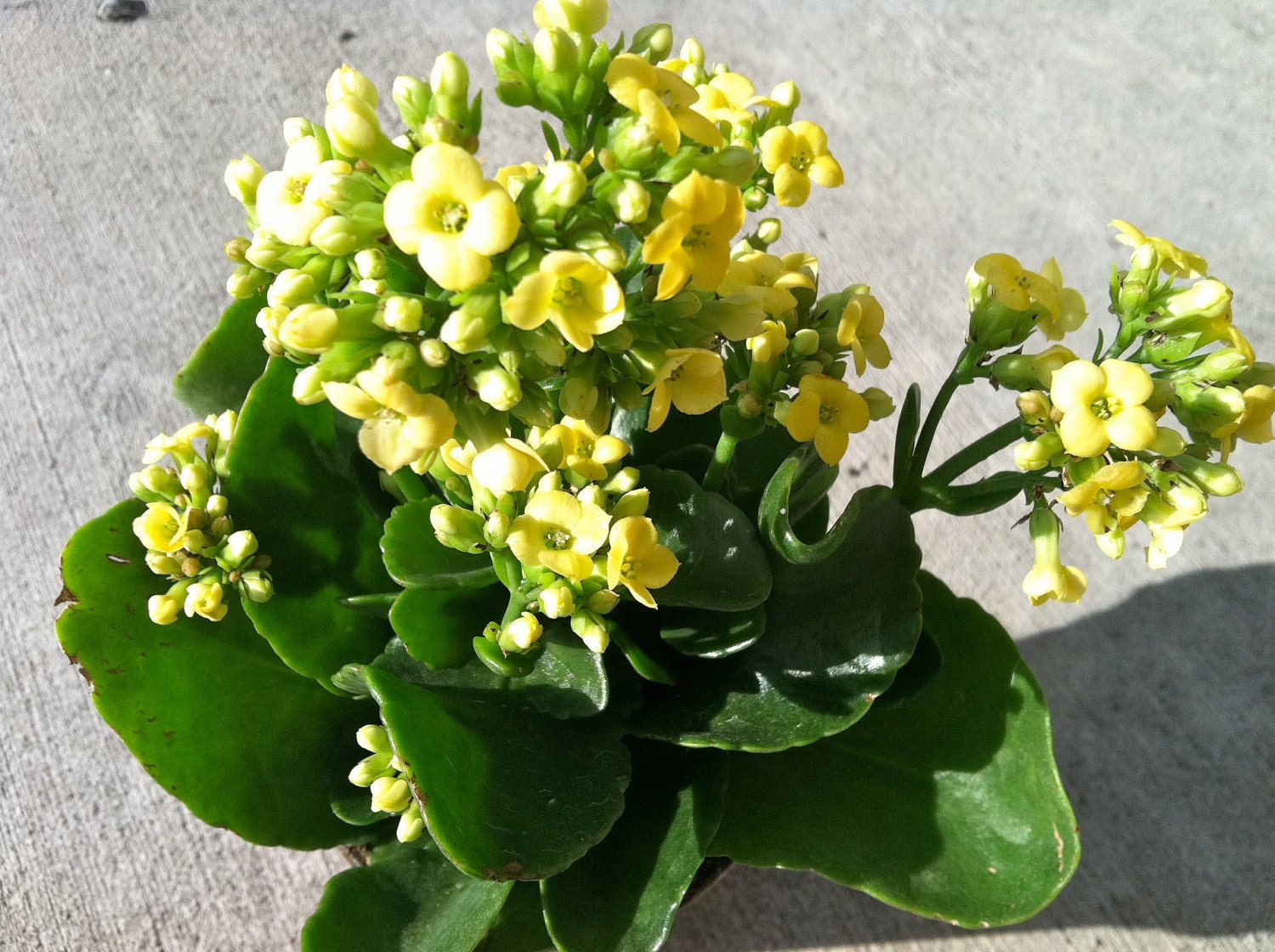Indoor flowering plants with names for Small indoor flowering plants