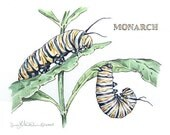 "Original Watercolor & Pen Monarch Caterpillar Painting, 7"" x 5.75""  image on 310 Cold Press Illustration Board - rearviewSTUDIO"