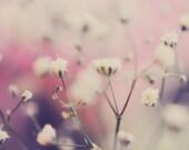 Soft spring botanical babys breath fine art photograph white pink purple 8x12 - TheInnerLightPhotos