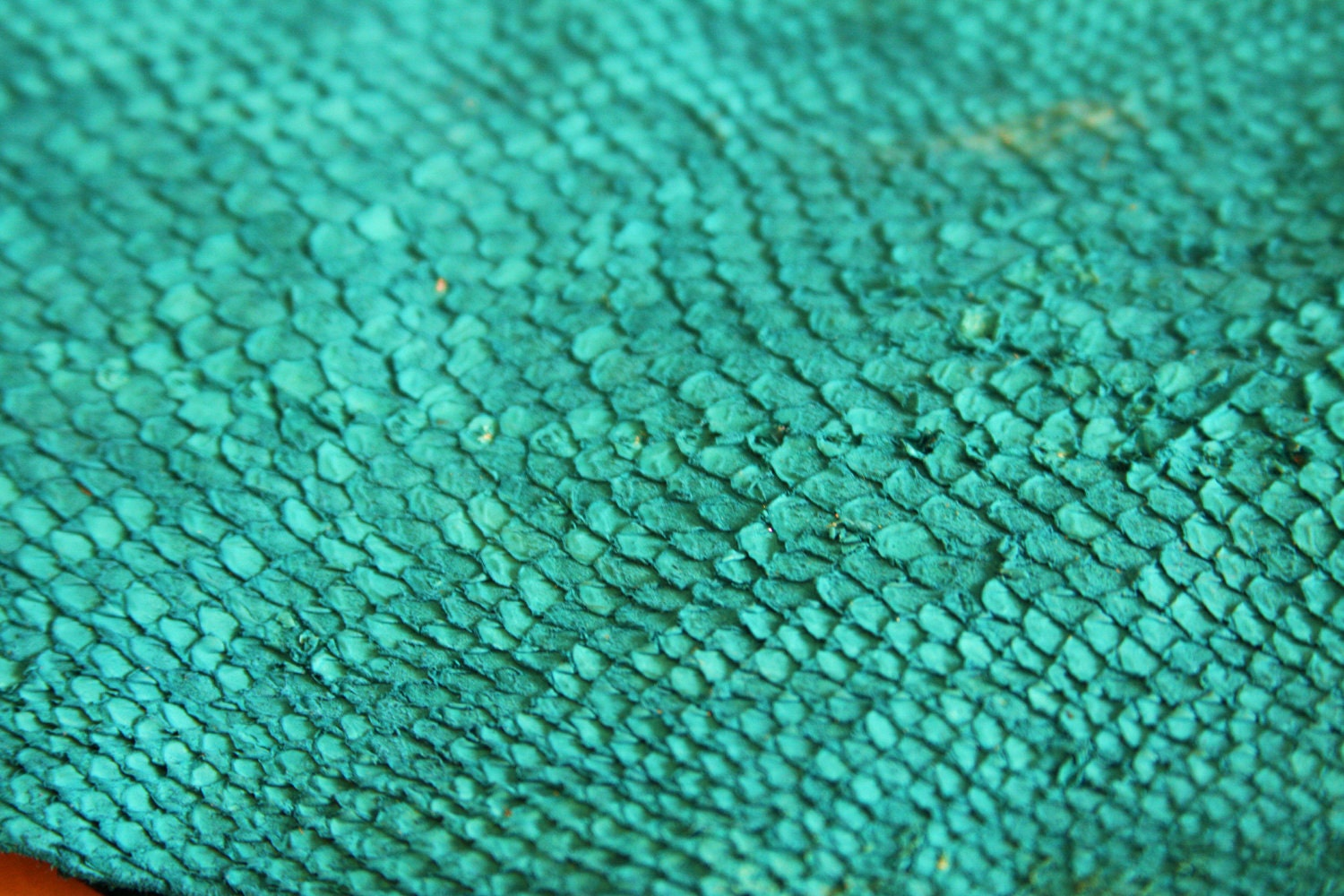 Fish scales texture the image kid has it for Fish without scales