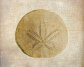 Sand Dollar, 5x7 Fine Art Photography, Seashell Photography - CindiRessler