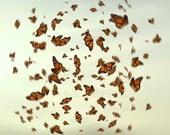 Monarch Butterflies Art - Ethereal Wall Decor, Happy Fine Art Print, 5x7, Ethereal Wedding Gift
