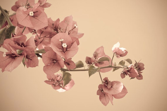 Blossom Branch photograph 8x12 Fine Art Photography delicate floral print wall art decor