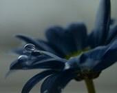 """Flower Photography - Blue Wall Art - Gerbera Daisy - 8x8"""""""