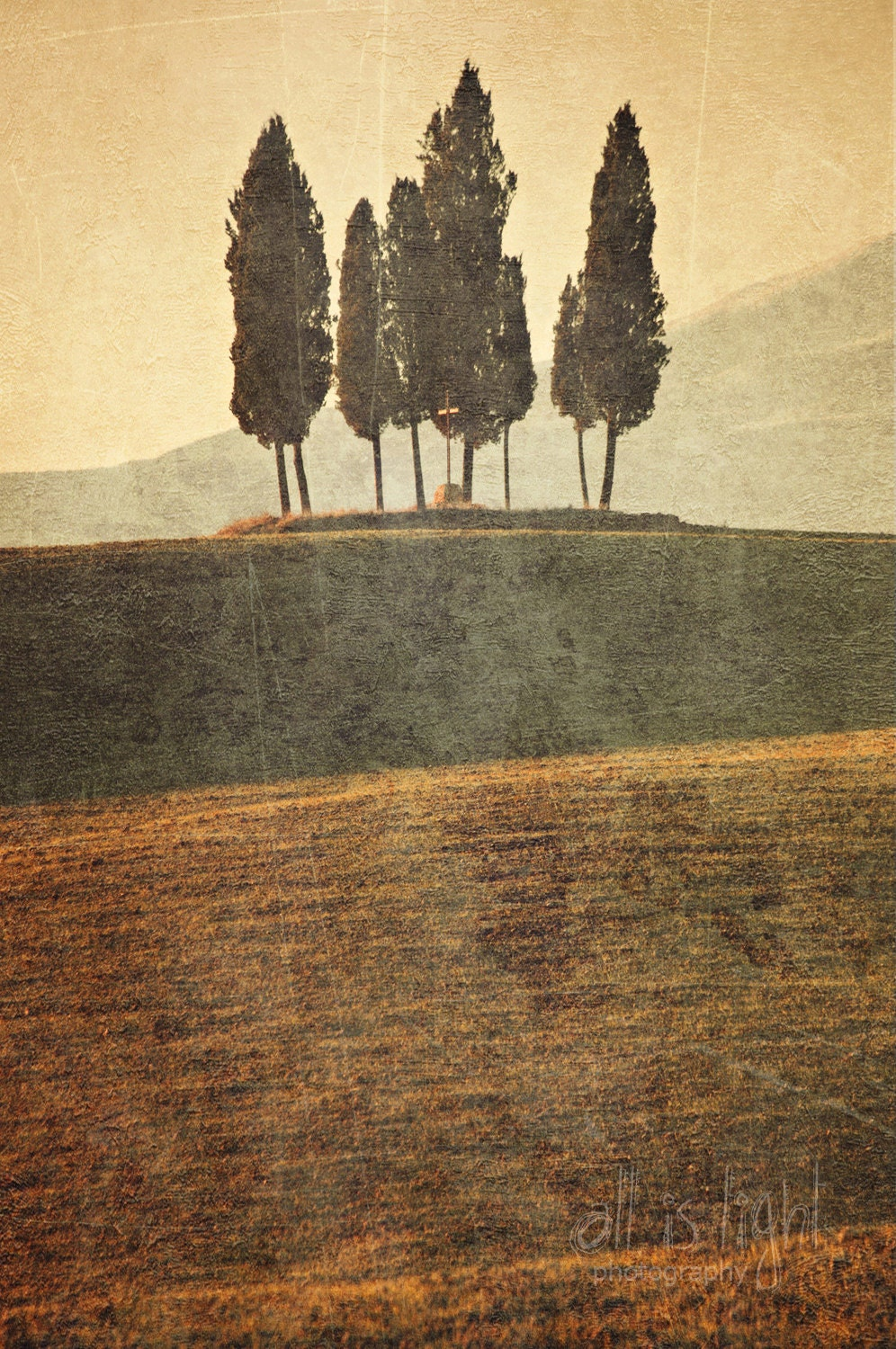 Cypress Trees of Tuscany Tuscany Photography fine by AllisLight