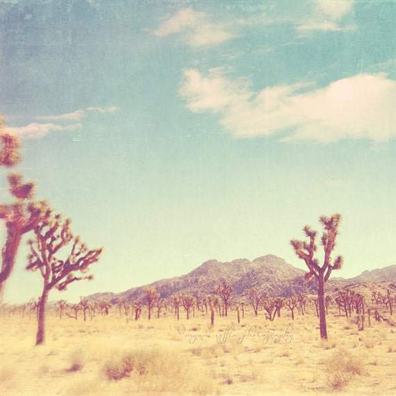 hazy desert scene of Joshua trees and mountain in the background