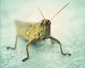 Grasshopper Photo, Minimalist Nature Photography, Fine Art Print, Vintage Look, Macro Insect, Green, Blue, Bug Nursery Art - ChicksPhotoGraphics