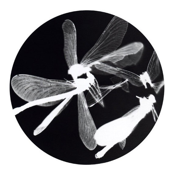 "Approx. 8x11"" black and white dragonfly print from original photogram artwork"