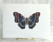 Butterfly Print.  5 x 7 Print of my Original Drawing. - SnoogsAndWilde