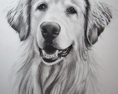 Hand drawn charcoal and graphite pet portrait - KimberlyBrownArt