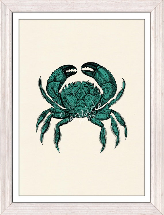 Seaside wall art Turquise crab - sea life print -Buying three or more  FREE SHIPPING WORLDWIDE - vintage natural sea history