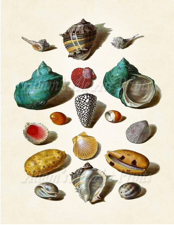 Vintage Pretty Seashells By The Seashore I: Vintage Art Print From An 18th Century Painting