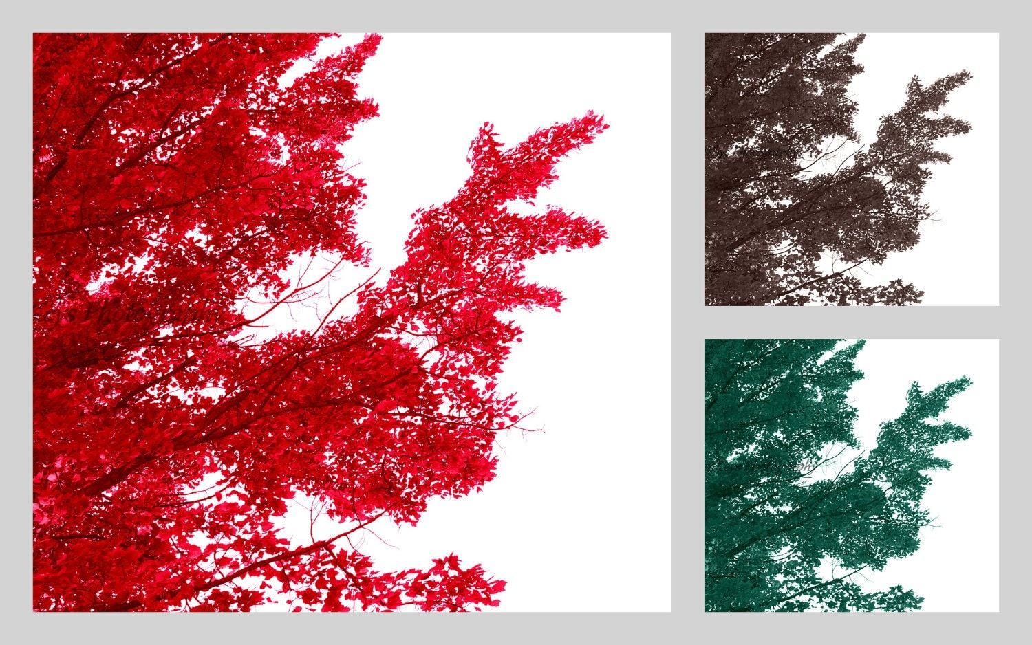 Tree Set Digital Download Photo Trees Red Brown by FOTOJENNIKS