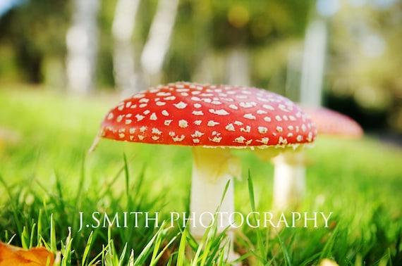 Alice in Wonderland red Mushroom note card / greeting card