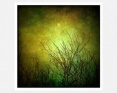 Nature Photography,  moss green, moon, bare trees, Equinox fine art photography print 10x10 - moonlightphotography