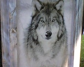 Gray Wolf in whitewashed frame